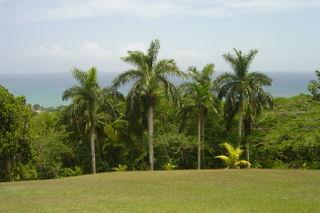 Jamaica2008 098