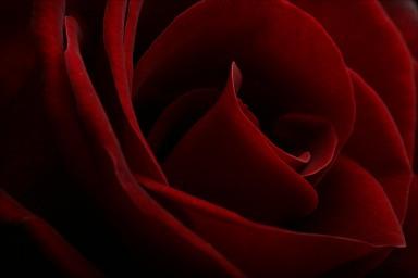 Redroses